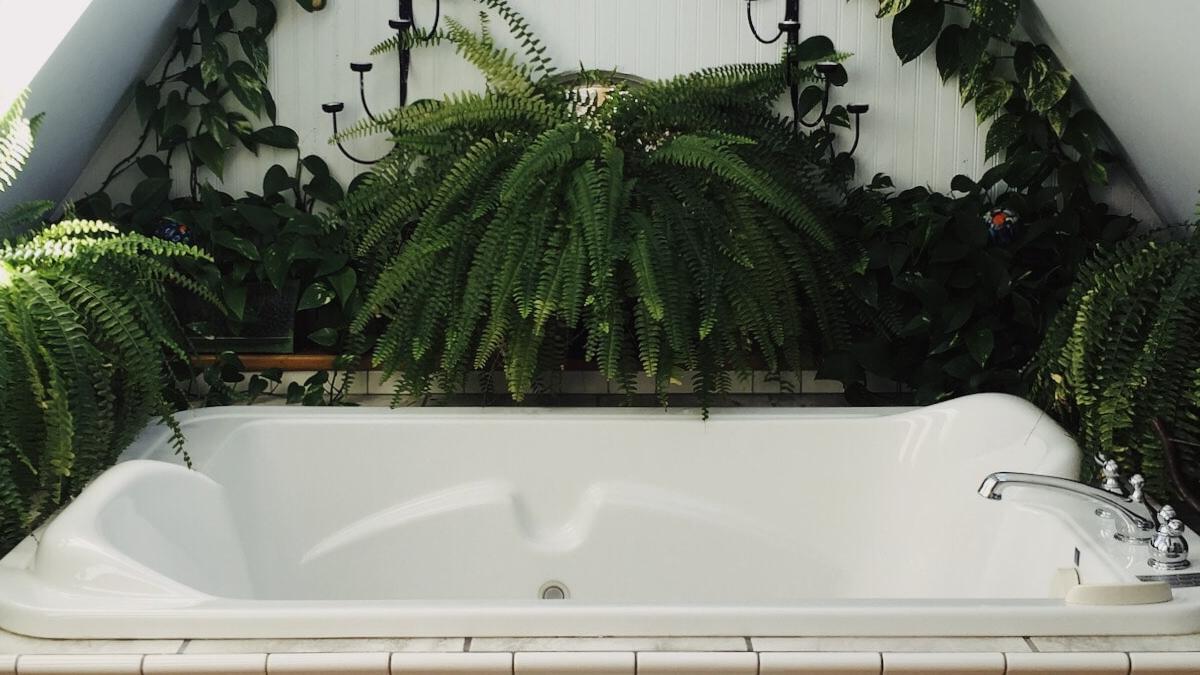 Растителност в банята – какво да изберете според фън шуй?